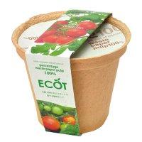 ECOT(M) ミニトマト