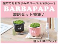 バーバパパの栽培セット