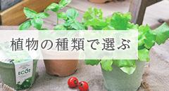 植物の種類で選ぶ