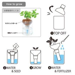 画像4: 育てるグリーンペット レタス