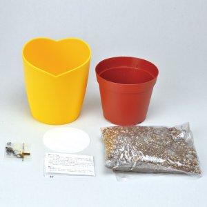 画像4: ミニヒマワリ栽培キット