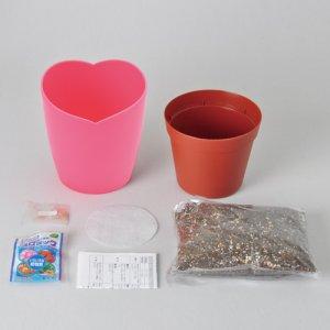 画像2: ピンクの花咲くストロベリー栽培キット