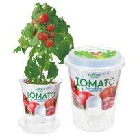 FreshFeel ミニトマト
