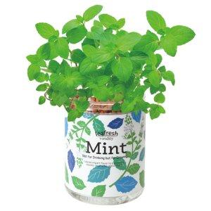 画像2: 育てるグリーンペット ミント