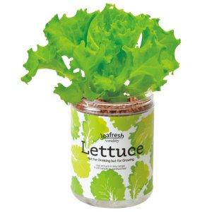 画像2: 育てるグリーンペット レタス