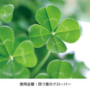 画像4: Petit Green