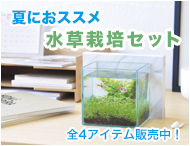 水草栽培セット