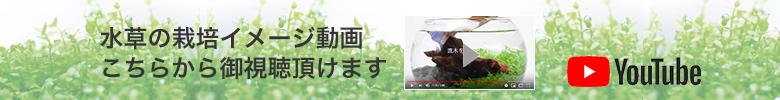 育てる水草動画