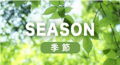 季節で選ぶ