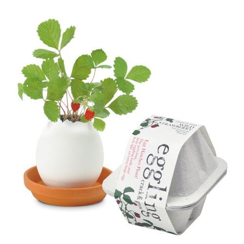 eggling eco friendly ワイルドストロベリー