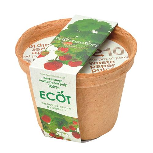 ECOT(S)ワイルドストロベリー